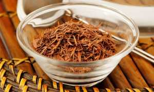 Лапачо — волшебный напиток из коры муравьиного дерева